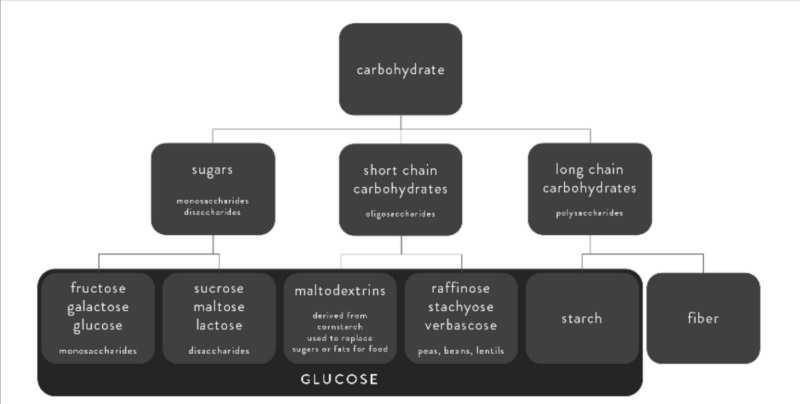 Umwandlung von Kohlenhydrate zu Glukose