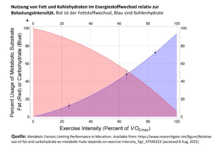 Fett- und Kohlenhydratstoffwechsel